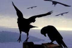 Continue verbetering en vernieuwing: De kraai en de koolmees