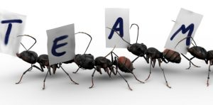 High-Performance-Team
